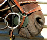 equine mouth and bit