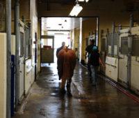 equine ward, WCVM VMC