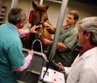 Equine endoscope
