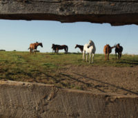 Horses on the Goodale Farm