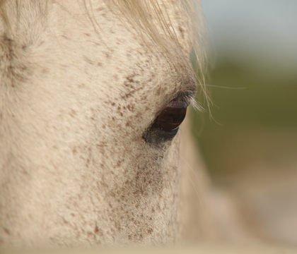 closeup of equine eye