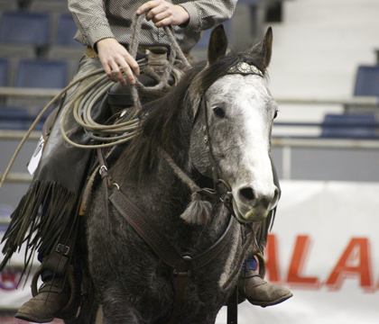 grey ranch horse, Agribition 2012