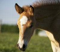 Cassie filly