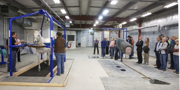 Clinicians demonstrated the equine treadmill during the WCVM horse health evening. Photo: Myrna MacDonald.