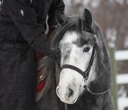torin.closeup.winter.2010
