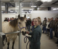 WCVM student Angela MacKay assists during a demonstration at the Ryan/Dubé Equine Performance Centre. The equine health tour is part of the 2014 Sask. Equine Expo. Photo: Myrna MacDonald.