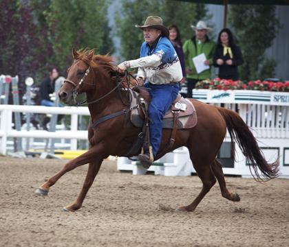 quarter horse barrels