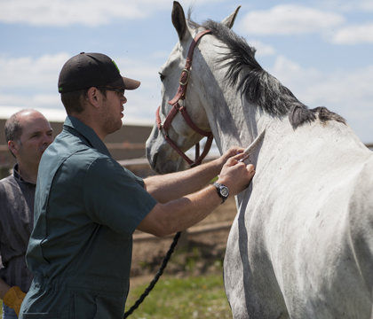 Vaccinations, deworming, hoof care and equine nutrition are among the topics that will be covered during the backyard horse health seminars. Photo: Christina Weese.