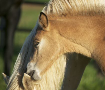 "Dr. Carolina Palacios: ""Owners should at least feel comfortable giving some breaths and giving some compressions [to the foal] until the veterinarian arrives."""