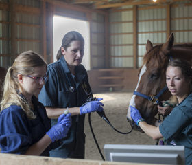 Veterinary students Kirsten Henderson (left) and Alison Williams (right) assist Dr. Julia Montgomery during a tracheal wash procedure. Photo: Christina Weese.