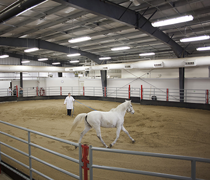 The WCVM is hosting a lameness-focused equine education event for local horse owners on Oct. 30. Photo: Christina Weese.