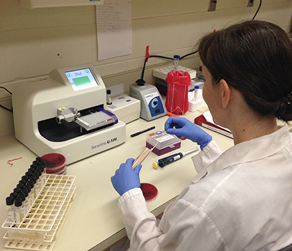 Mary Timonin tests fecal samples for antimicrobial resistance. Photo by Rachel Courtice.