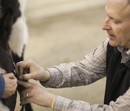The WCVM's Dr. Stephen Manning performs an acupuncture demonstration during the 2015 Equine Expo. Photo by Christina Weese.