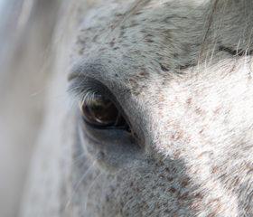 eye-closeup.jpg